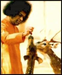 Sai Baba Feeding Deers