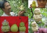 Buddha Pears - Pears In The Shape Of The Budha
