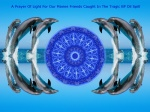 BP Oil Spill - Healing Dolphin Mandala One
