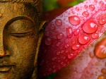 Pictures Of The Buddha Wallpaper RainDrops