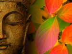 Pictures Of The Buddha Wallpaper Autumn
