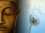 Buddha Dandelion - Zen Wallpaper