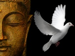 Zen Buddhist Wallpapers - The White Dove