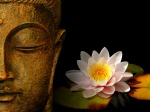Buddha Water Lily - Zen Wallpaper