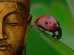 Pictures Of The Buddha Wallpaper Ladybug