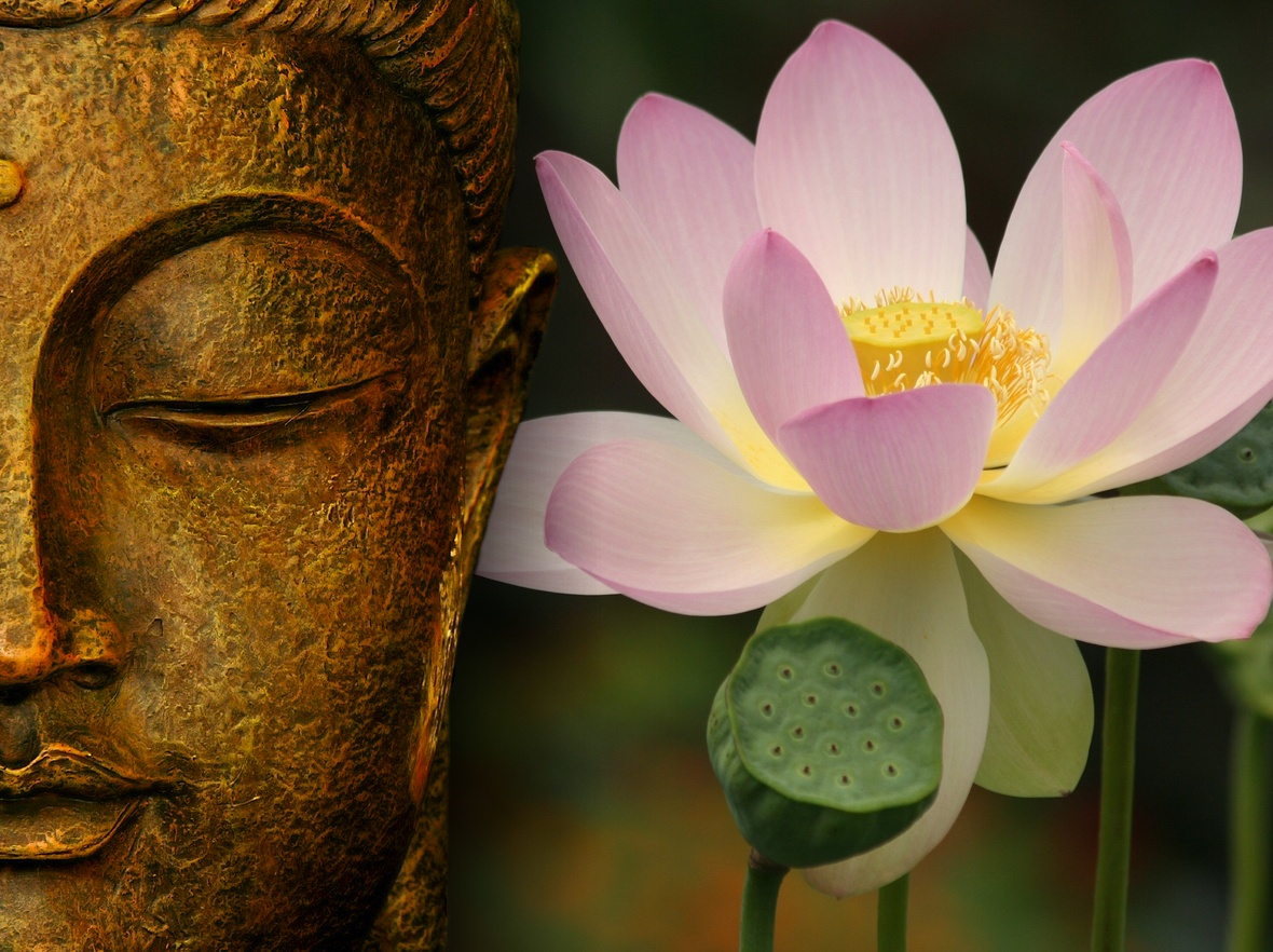Lotus Flower Buddha Buddha Wallpapers | Sa...
