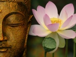 Pictures Of The Buddha Wallpaper Lotus