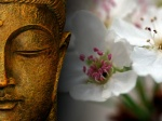 Zen Pictures Of The Buddha Wallpaper White Blossoms